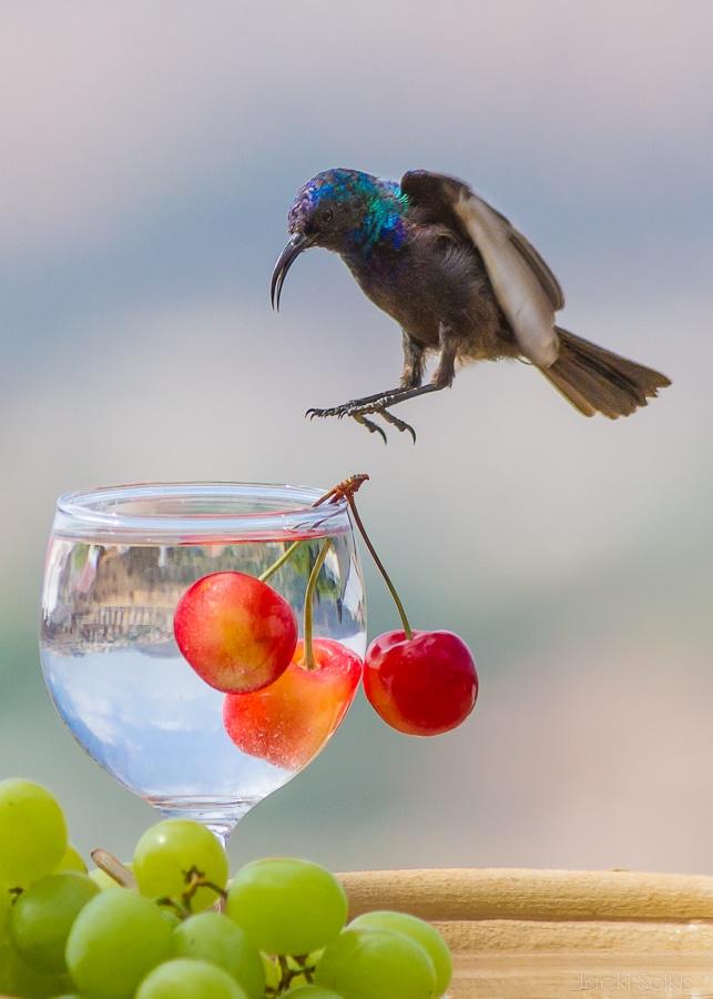 יורד על משקה