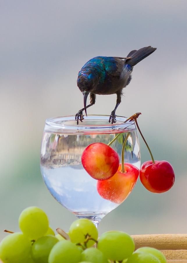 צופית על משקה אקזוטי