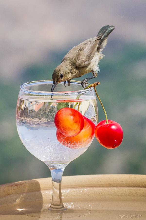 צופית שותה משקה אקזוטי