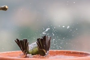 אמרנו לך שהמים לא עמוקים! למה לקפוץ ראש?