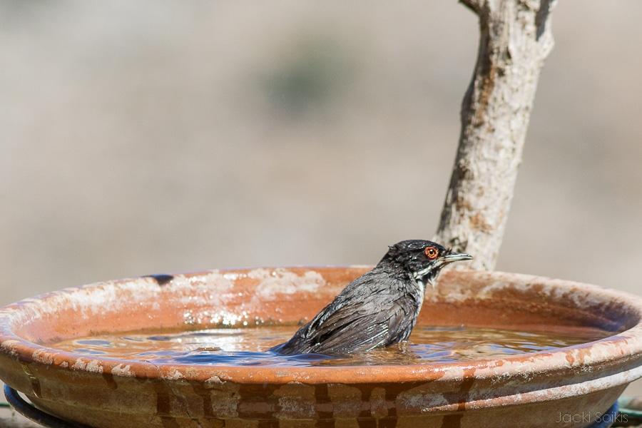 טבילה בג'קוזי שבצימר