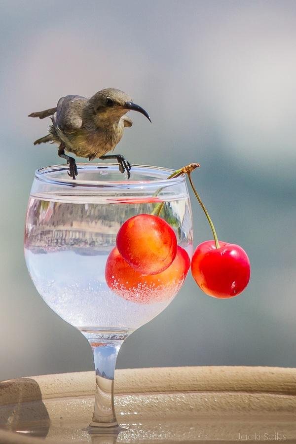 צופית בוחנת את המשקה