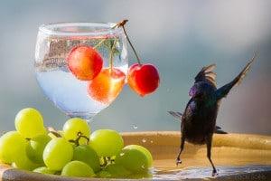 אם שותים לא עפים