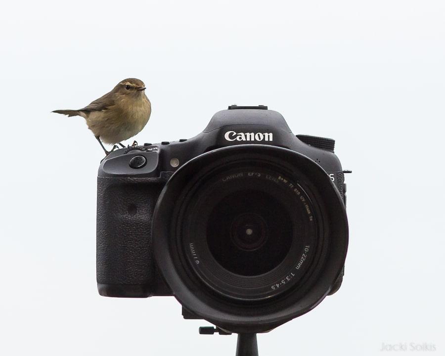 עלווית על המצלמה כחלק מהתרגול בקורס הצילום המועבר בצימר