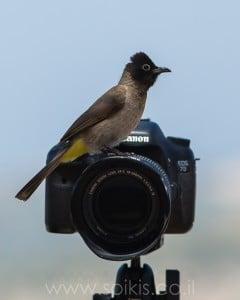 בולבול על מצלמה