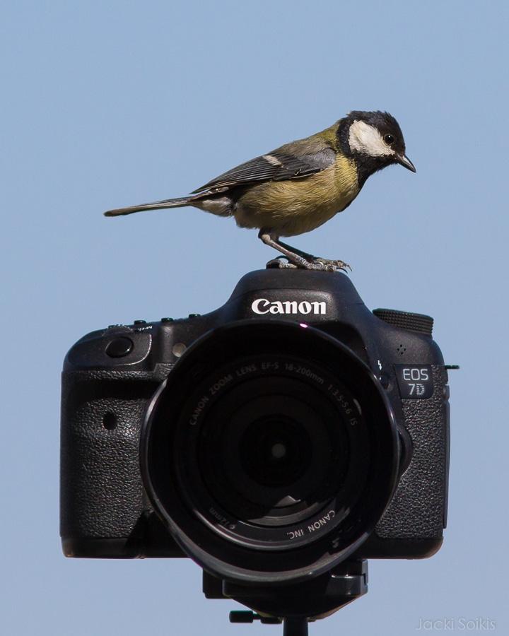 ירגזי על מצלמה