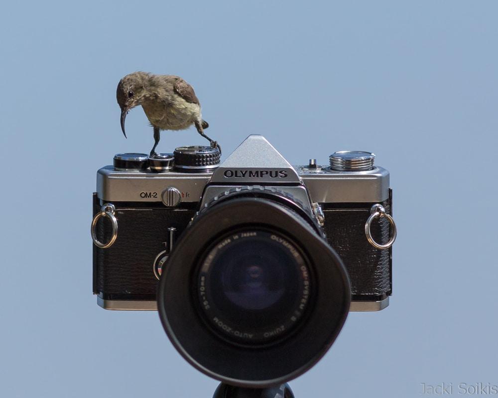 צופית על מצלמה