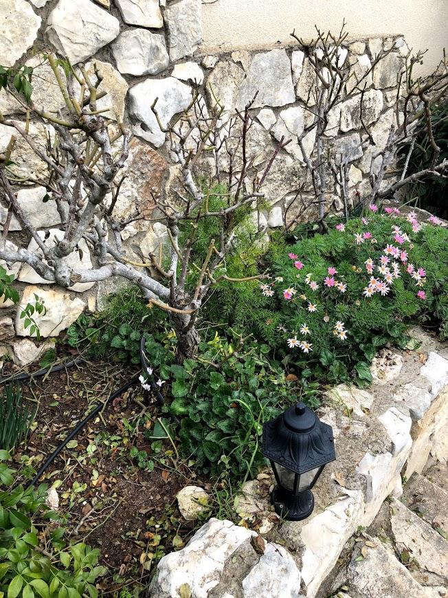 ורדים לאחר גיזום