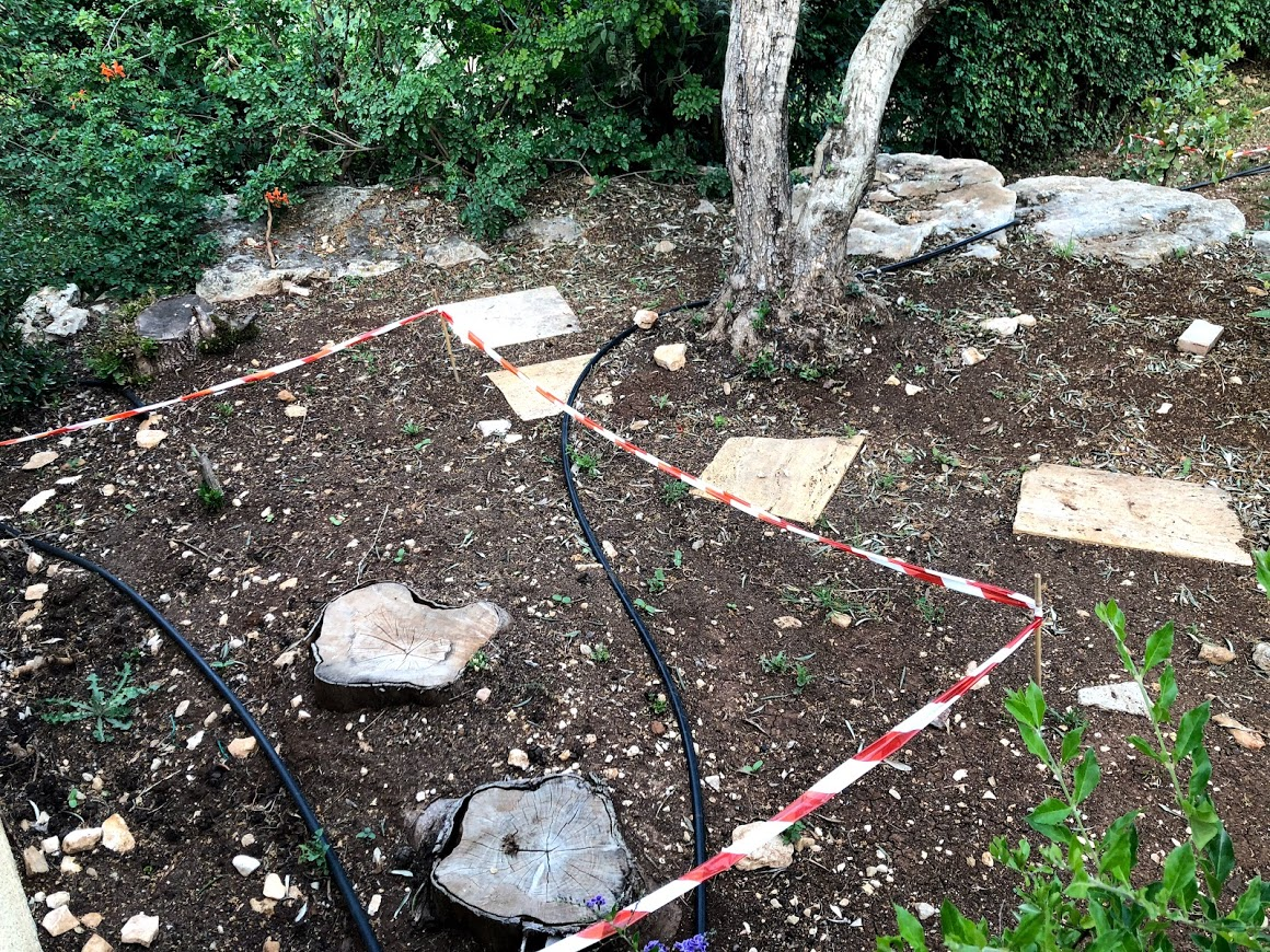 חלקת חמניות בצמוד לעץ הזית בצימר