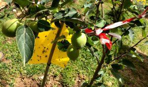 תמיכה לענף גדוש בתפוחים בצימר