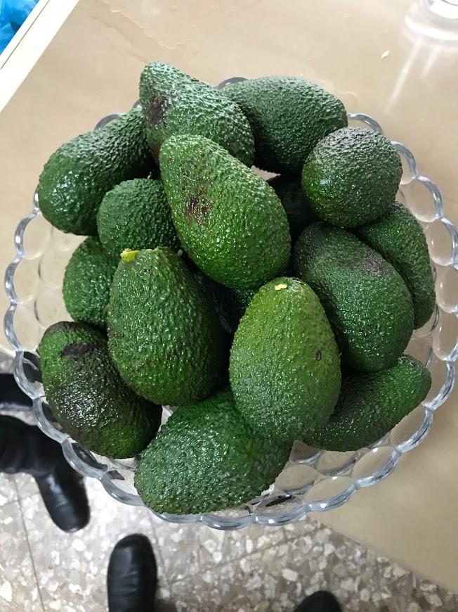 פרי האבוקדו